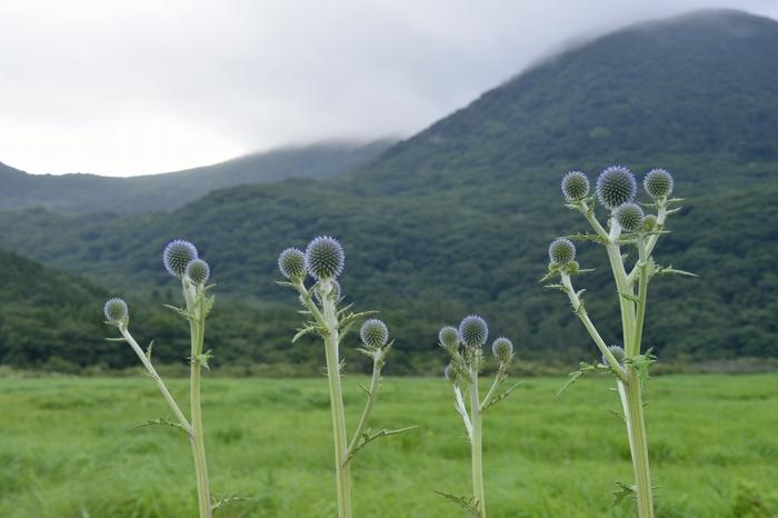 タデ原湿原 (9)