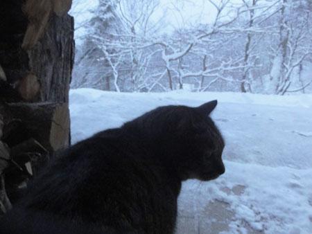 今朝も寒い2