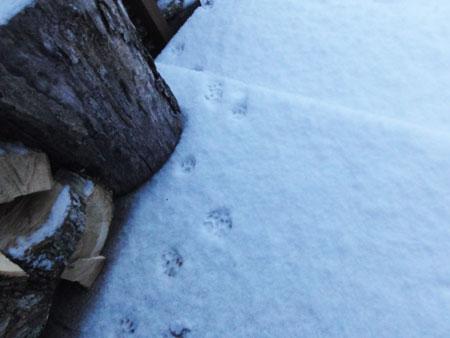 また、雪だ4