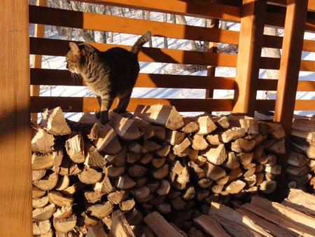 マロンは薪小屋が好き1