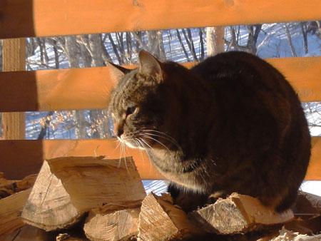 マロンは薪小屋が好き4