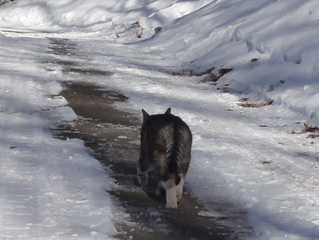 雪でもお散歩3