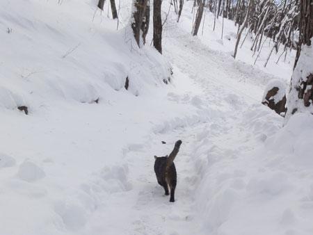 除雪は来たけど3