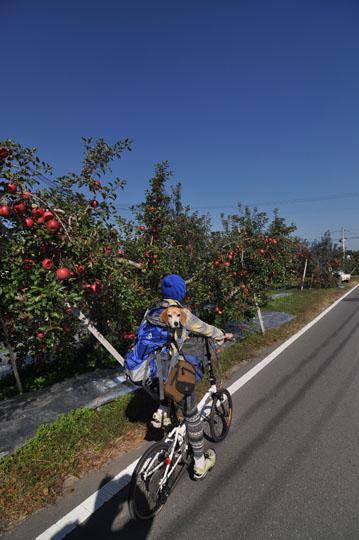 009リンゴ畑