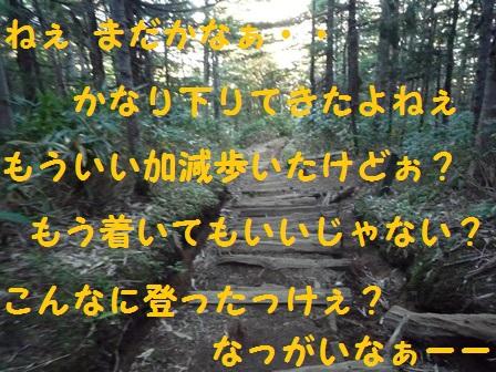 201311241455006ed.jpg