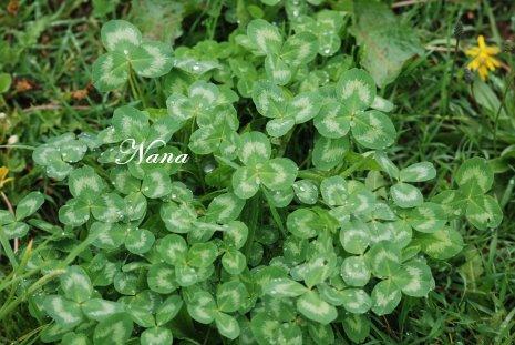 clover20-2.jpg