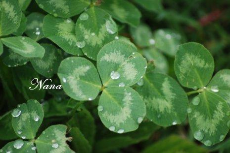 clover20-3.jpg