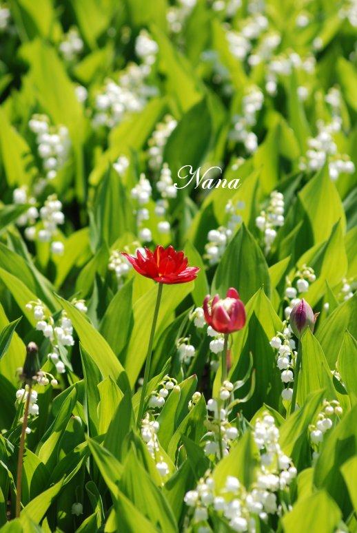 flower20-3.jpg