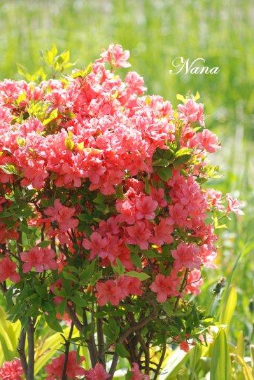 flower20-4.jpg