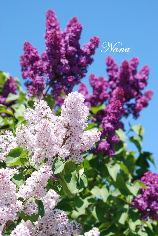 flower20-5.jpg