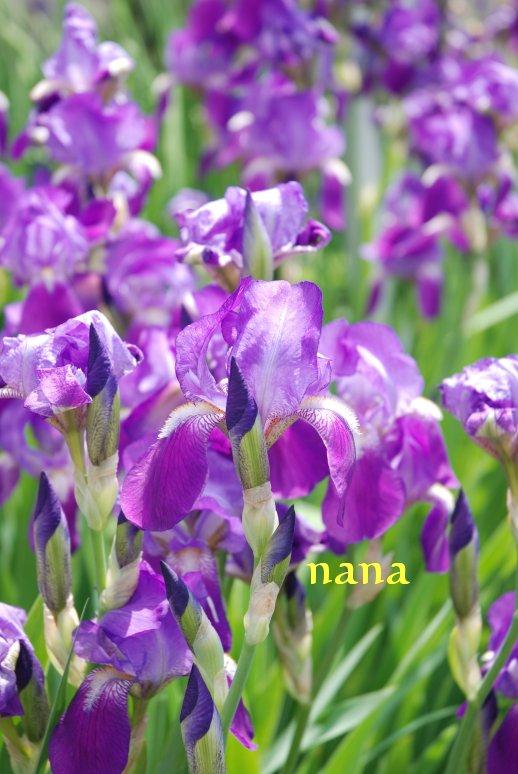 flower20-6.jpg