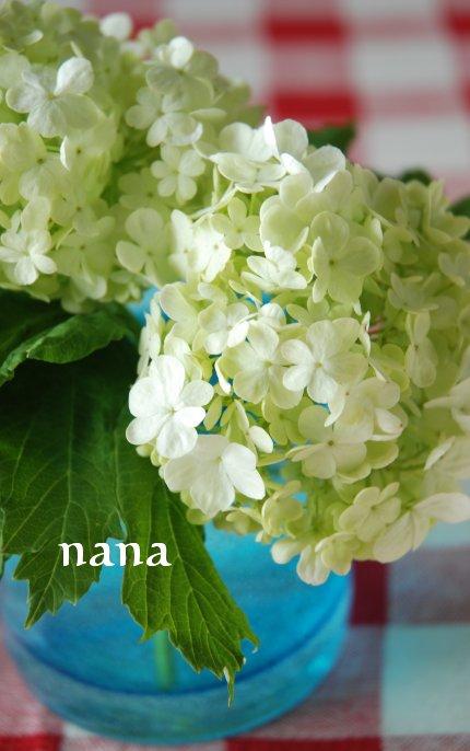 flower20-7.jpg