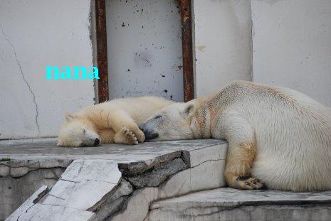 zoo20-1.jpg