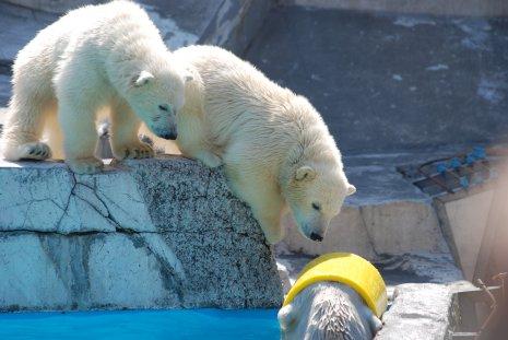 zoo20-24.jpg