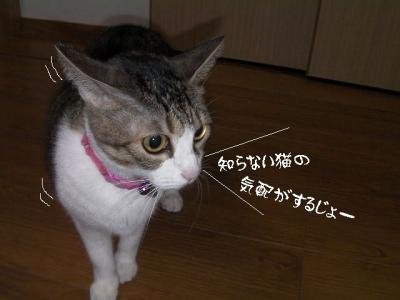 抜け毛01