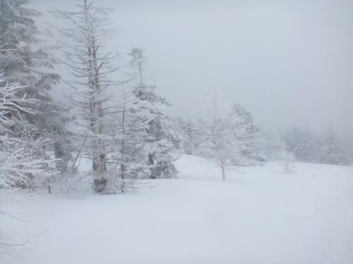 新雪(2)