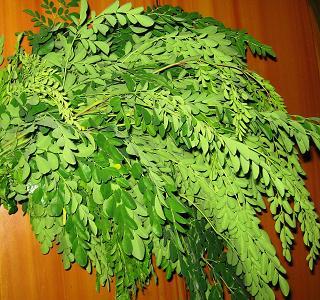Muringakka leaf