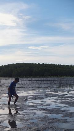 Biabas coast