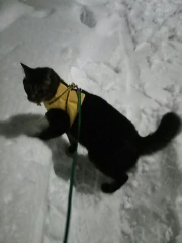 h26,2大雪の」週末散歩ちいた