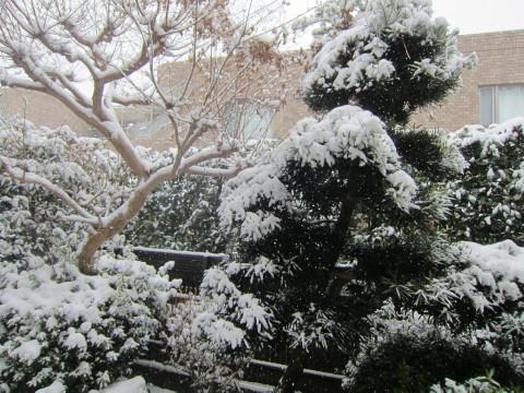 h26,2大雪の週末