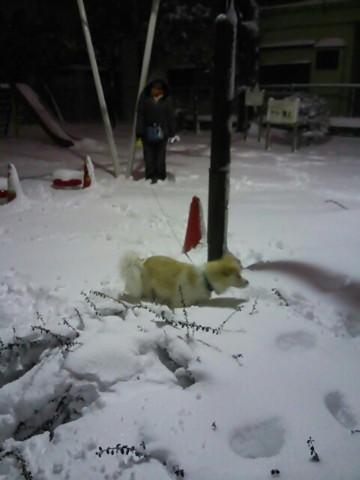 h26,2大雪の週末散歩アロー2
