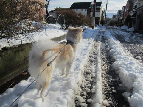 h26,2大雪の週末散歩アロー昼