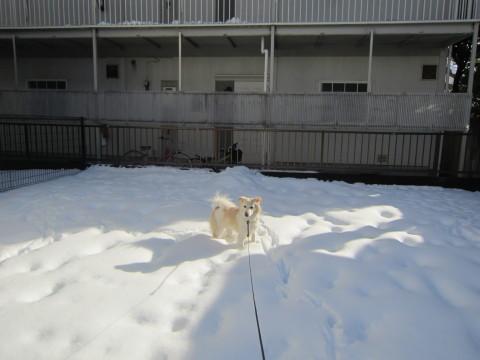 h26,2大雪の週末散歩アロー昼2
