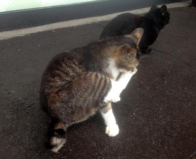 kawasoe 猫