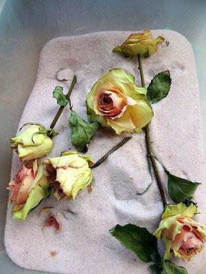 乾燥薔薇DSCN8774