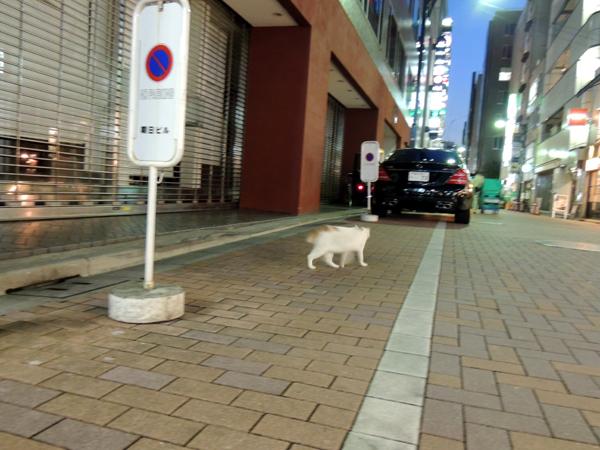ギンザノ白猫DSCN9320