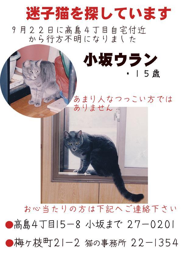 迷子猫小坂ウラン