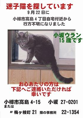 小坂迷子猫チラシA4