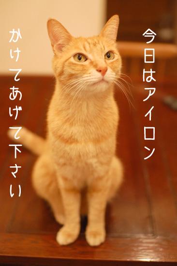 20130509_20.jpg