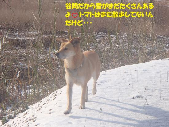 P1220244_convert_20140125060759.jpg
