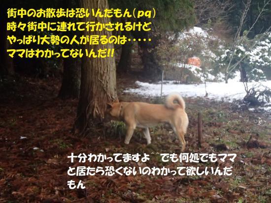 P1220247_convert_20140125060829.jpg