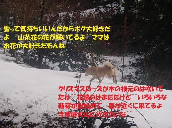 P1220248_convert_20140125060843.jpg
