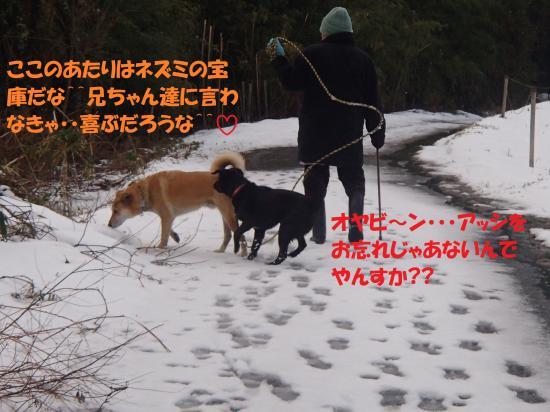 P1220273_convert_20140125061107.jpg