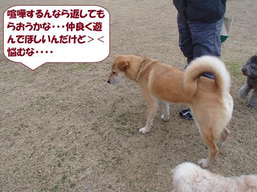 P1250347_convert_20140127081738.jpg