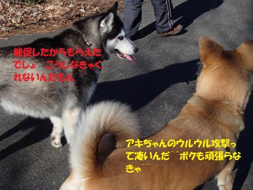 P1270363_convert_20140128080442.jpg