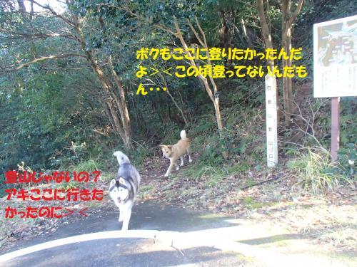 P1270369_convert_20140128080518.jpg