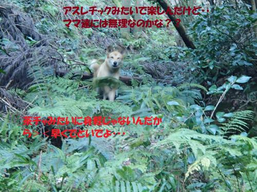 P1270373_convert_20140128080557.jpg