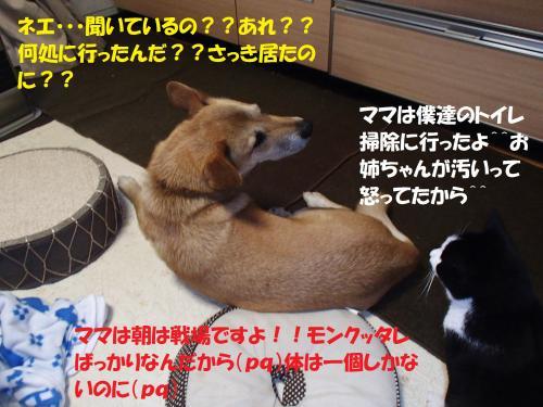 P1310478_convert_20140131074708.jpg