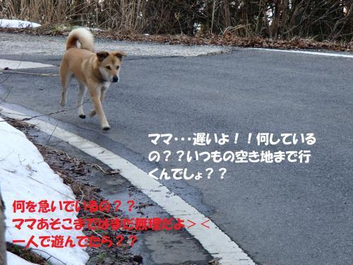 P1310479_convert_20140201083303.jpg