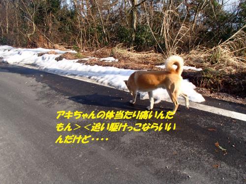 P1310487_convert_20140201083614.jpg