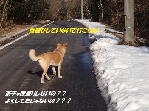 P1310489_convert_20140201083633.jpg