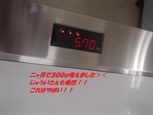 P2020511_convert_20140204072739.jpg