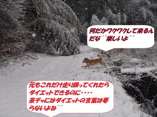 P2040547_convert_20140205075653.jpg