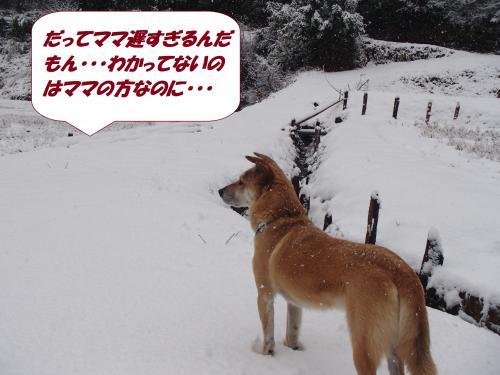 P2040552_convert_20140205075753.jpg