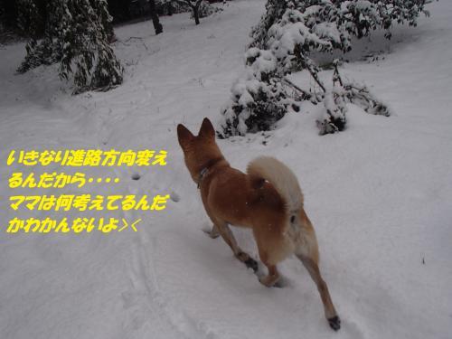 P2040558_convert_20140205075847.jpg