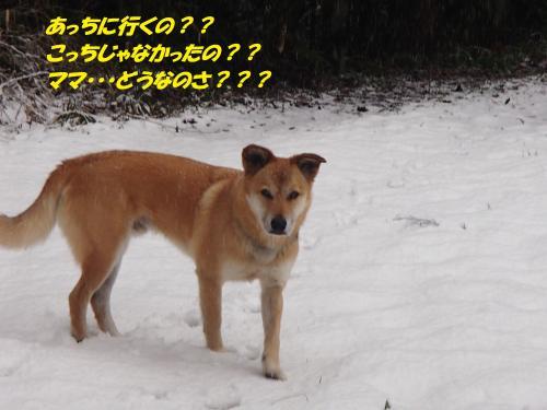 P2040560_convert_20140205075924.jpg
